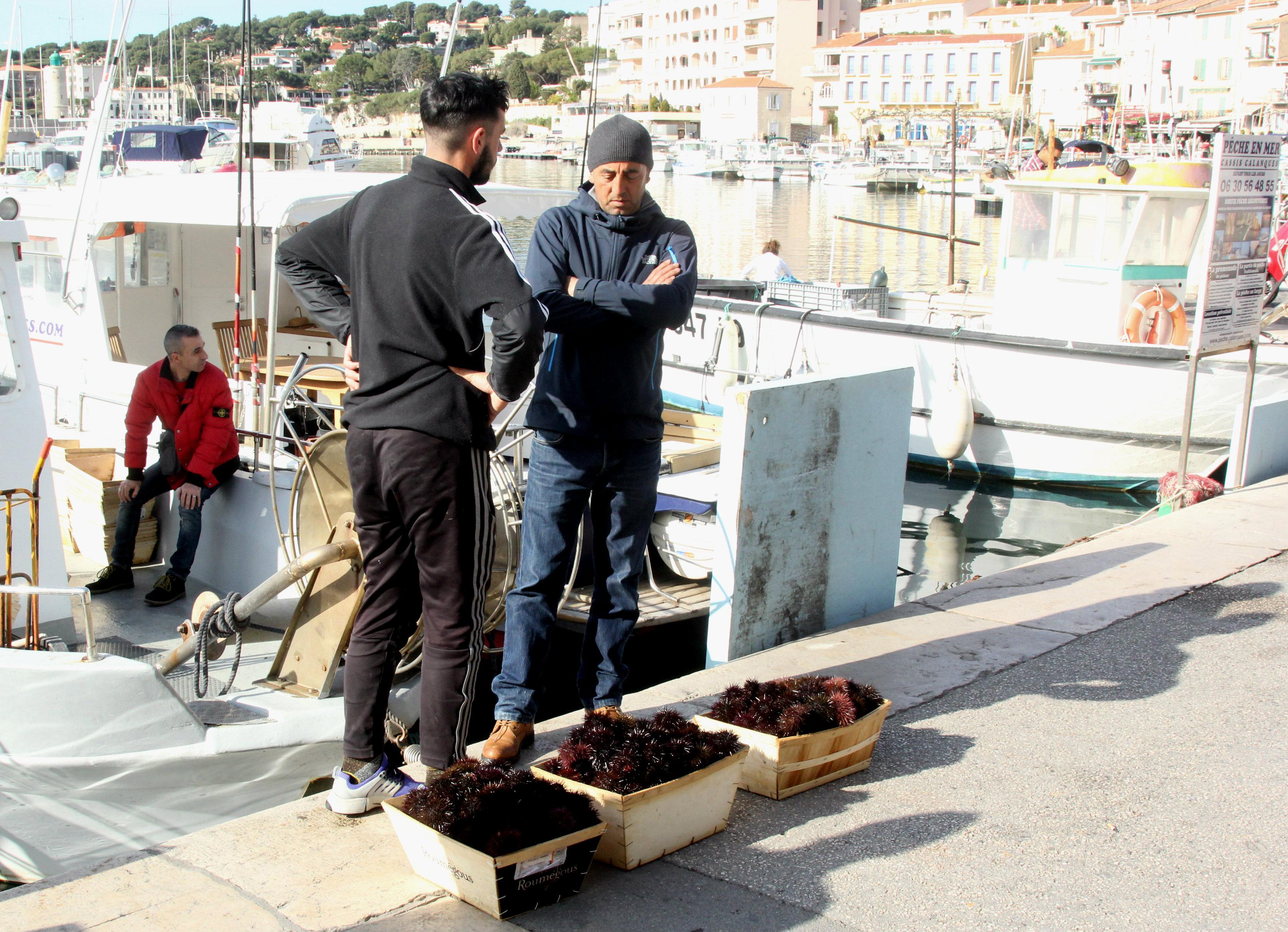 Søpindsvin vurderes på havnekanten