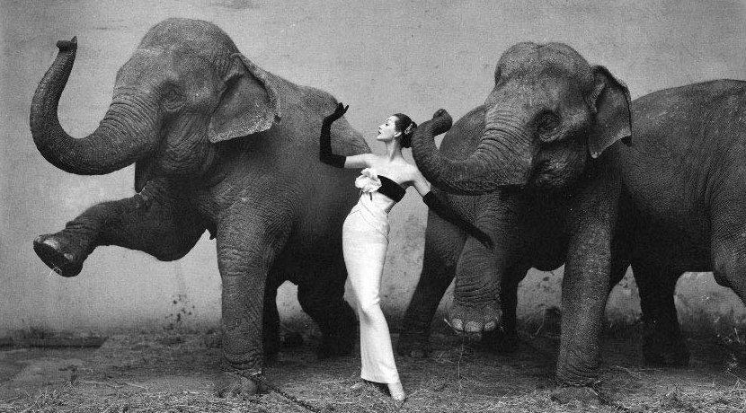 Dagens ret: elefant