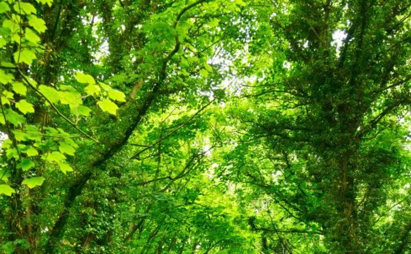 På den grønne gren