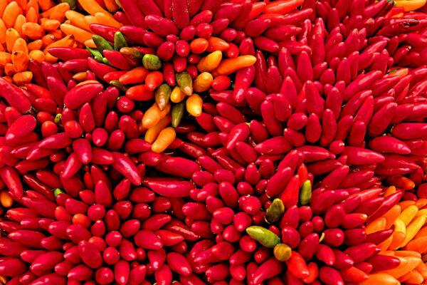 Chili con carne (og vinen dertil)