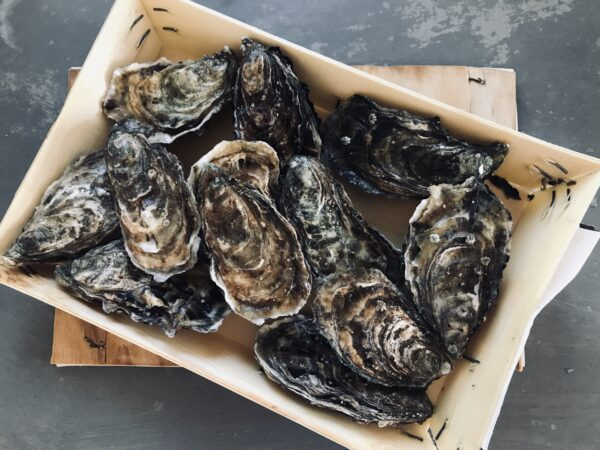Guide: hvidvin til østers