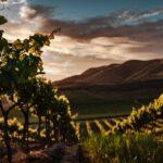 Vin fra Californien