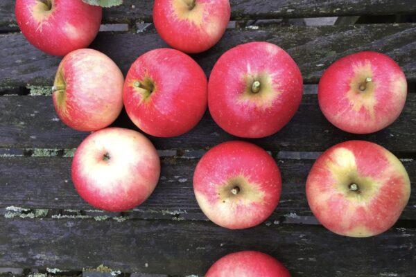An apple a day …