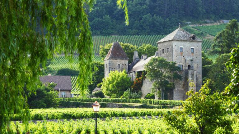 Bourgogne vingård